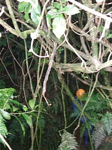 2008-05-17 19.14.18 80 Acres Abseil Sian Wayne.jpeg: 360x480, 44k (2009 Apr 03 00:00)