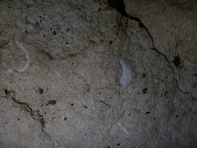 2013-03-03 14.30.58 WotW_13_fossils.jpeg: 4608x3456, 2899k (2013 Mar 18 00:00)