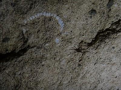 2013-03-03 14.31.37 WotW_14_fossil.jpeg: 4608x3456, 3700k (2013 Mar 18 00:00)