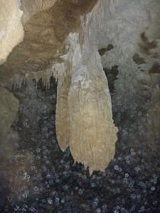 2013-03-31 19.11.13 P1040914 Simon - Mangapohue Cave.jpeg: 3000x4000, 4395k (2013 Aug 11 00:00)